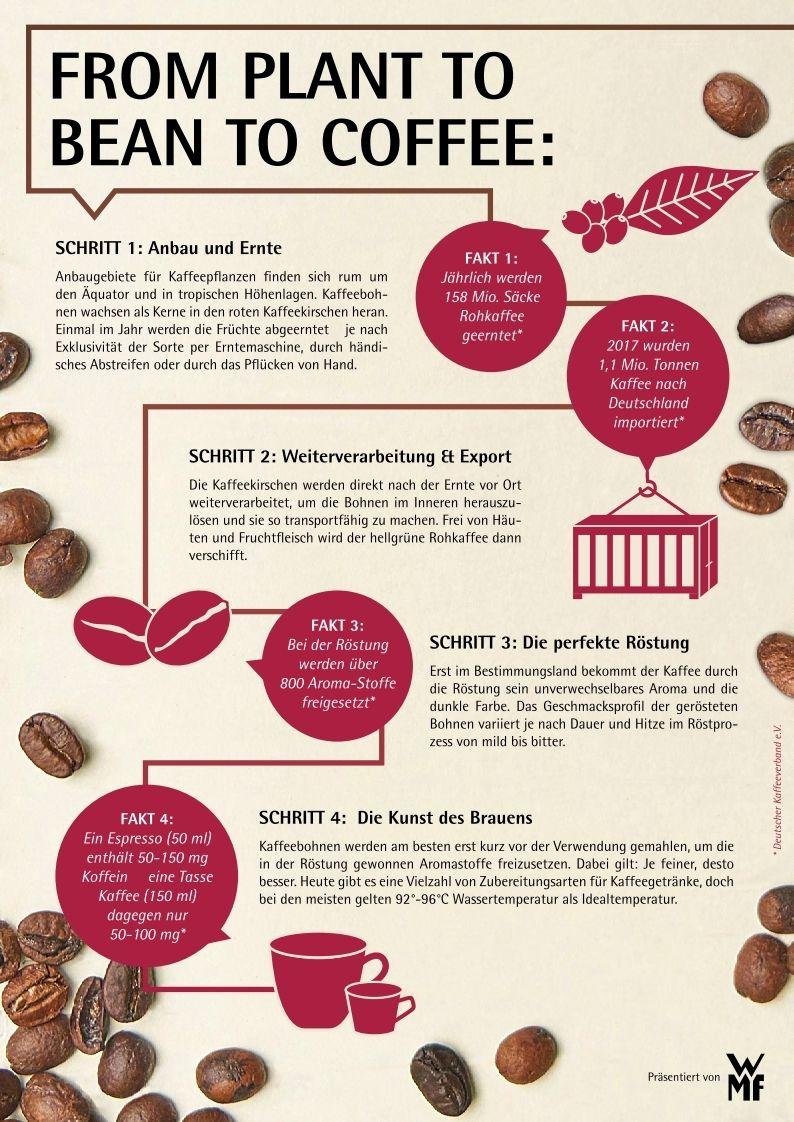 Wmf Plant To Bean To Coffee Grafik